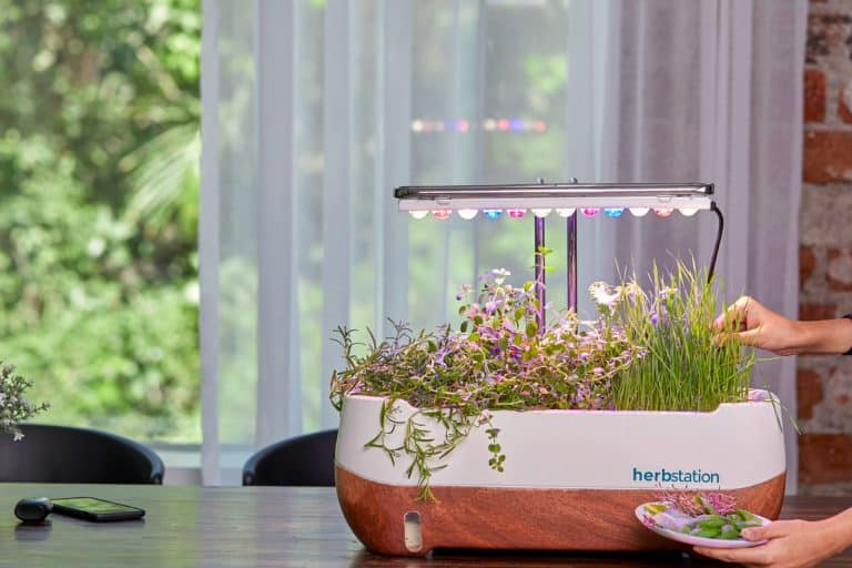 Do It Right! Growing Microgreens Indoors With LED Lights