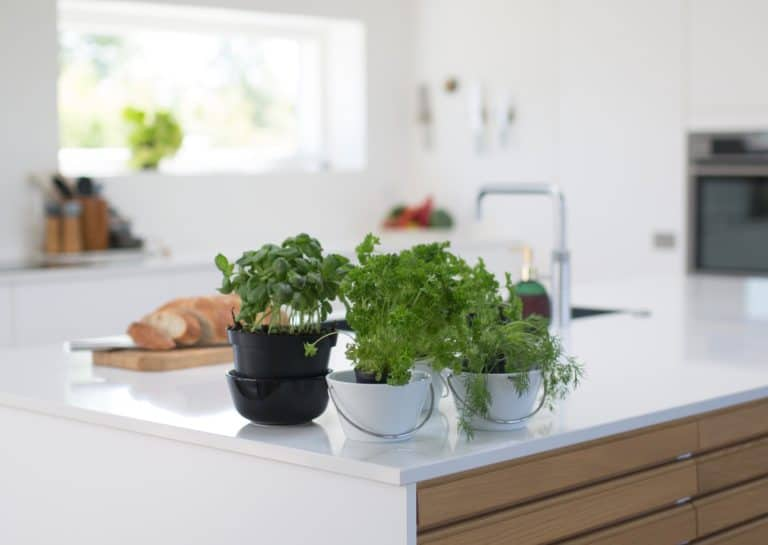 Our Top Tips for Growing an Indoor Herb Garden in Winter