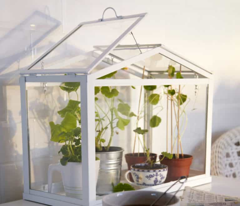 How To Setup an Indoor Greenhouse For Your Apartment