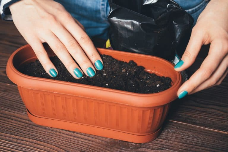 Does Potting Soil Go Bad? The Answer Is Not What You Might Think