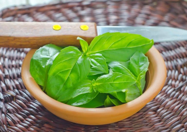 How to Prune Basil Without Damaging It: Keeping Hope Alive!