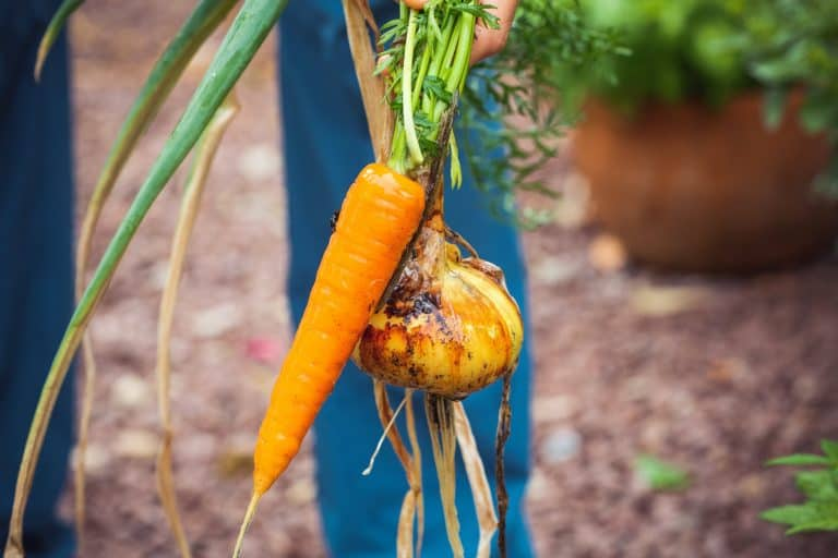 9 Easy to Grow Vegetables for First Time Gardeners