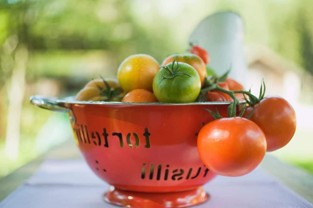 Various types of tomatoes in colander on table out of doors
